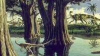 06.登陆 藻类植物 苔藓植物 蕨类植物 裸子植物 被子植物 有性繁殖 无性繁殖 土豆电池