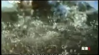 荒野求生:太平洋无人荒岛 美国夏威夷