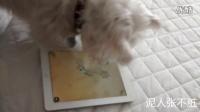搞笑 狗狗用IPAD玩捕鱼游戏