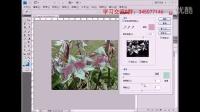 """PS基础入门教程使用""""替换颜色""""对图中的花朵替换颜色"""