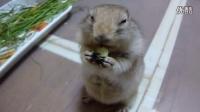 小松鼠吃黄瓜——好脆