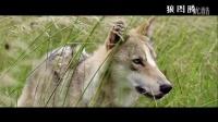 4分钟看完《狼图腾》最精彩的故事情节