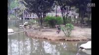 武汉动物园一游