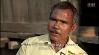 印度男子花36年打造森林 老虎大象成群