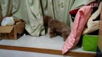 贱狗骚扰猫咪
