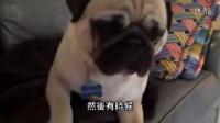 视频: 【发现最热视频】太楚楚可怜了!超萌巴哥犬被主人骂哭了_高清##qq694517876 时彩总代