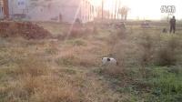 视频: 太仓犬找兔子Q3203879019