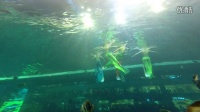 浩海立方海洋馆潜水