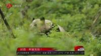 新闻眼20150516封面:熊猫驾到! 高清