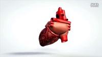 TS0078三维动画旋转模型的人体心脏