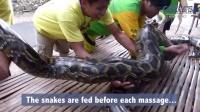菲律宾动物园为游客提供刺激的蟒蛇按摩服务