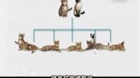 猫文化特典~第二十一期