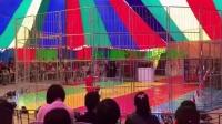 老虎狮子演出国际马戏团16