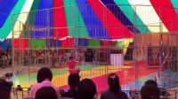 老虎狮子演出国际马戏团6