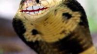 会笑眼睛蛇会说话 AE特效