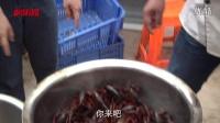 《虞乐城》美食娱乐节目,第一集之腐乳龙虾