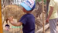 2015-zoo