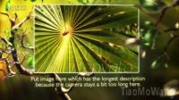 绿色清新植物主题AE模板_LM 021