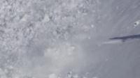 雪崩了!白色小白兔快跑啊 (23播放)