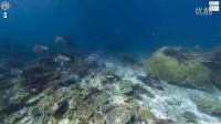 谷歌地图带你畅游海洋Explore the ocean with Google Maps