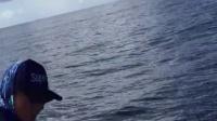 东山铁板搏黄鳍金枪鱼