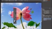 [PS]Photoshop CC基础入门教程ps工具操作讲解ps设计制作抠图去水印美化教程 3