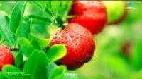 养生堂天然维生素C 2015年新广告片