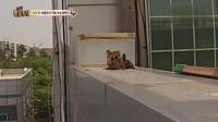 TV 动物农场 150621
