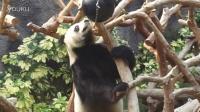 Giant Panda Pavilion in MACAU