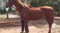 哪有卖马的想买马什么地方卖马