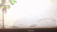 微星GE62 007 闪屏加黑线