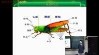初一生物《昆虫》教学视频-嵇建军