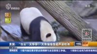 """美国:""""白云""""又怀孕?  大熊猫接受超声波检测 新闻夜线 150711"""