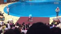 大连老虎滩 欢乐剧场海狮海象表演拍摄 值得一看