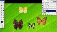 [PS]photoshop CS3专家讲堂-15移动选择层与变换控件