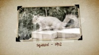 经典怀旧 影集图片照片展示 AE模板源文件工程