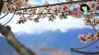 西藏林芝(二)美哭 揭秘一天呈现四季的绝美村落 14