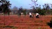 苏教版三年级科学下册第一单元 土壤与生命