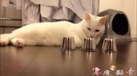 超搞笑视频,你看见过会押大小的猫咪吗?