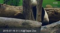 2015-07-18 圓仔自high完吃竹桿 (The Giant Panda Yuan Zai)