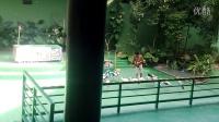 马六甲动物园Melaka zoo 动物表演