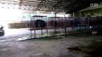 缅甸小猛拉熊厂