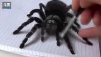超逼真蜘蛛素描 感觉下一秒就会动的感觉