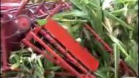 小型玉米收割机作业视频