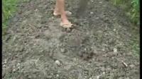 火龙果露地栽培技术_桂花苗怎么种植_盆栽桂花树栽培技术视频