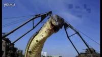 【震惊】世界上最大的蛇!被發現時103歲了!