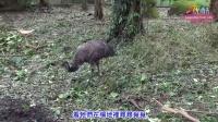 「風災過後」全體總動員 - 動物園明重新開放 After Typhoon Taipei Zoo Opens Tomorro