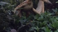 2015.8七夕广州欢乐长隆动物世界恐龙世界