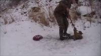 拯救被捕兽夹困住的山猫,这小家伙一点都不配合啊!