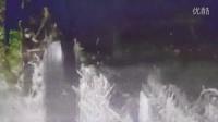 山东玉米收割机收割玉米现场拍摄